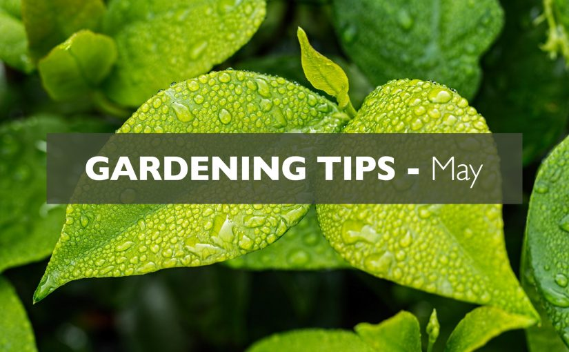 Gardening Tips – May