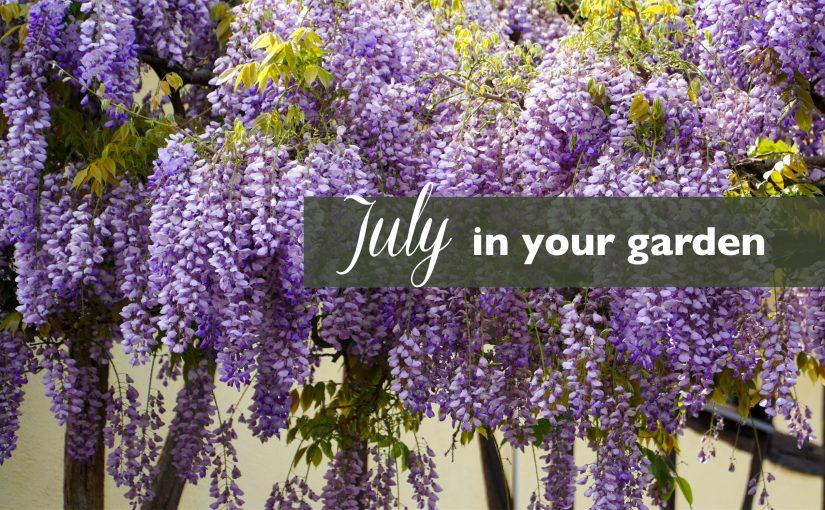 July Gardening Tips!