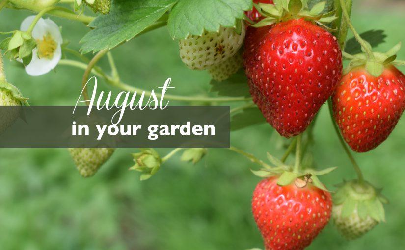 August – In Your Garden