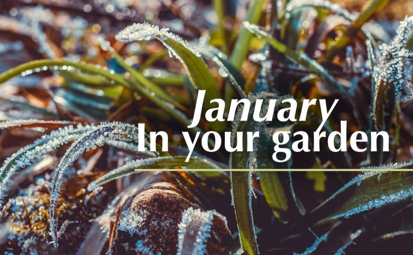 January in your garden!