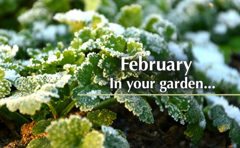 February in your garden…