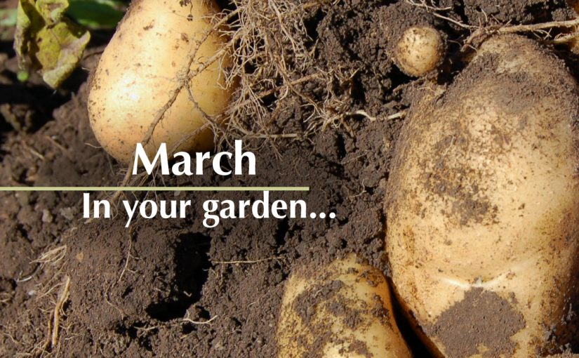 March In Your Garden…