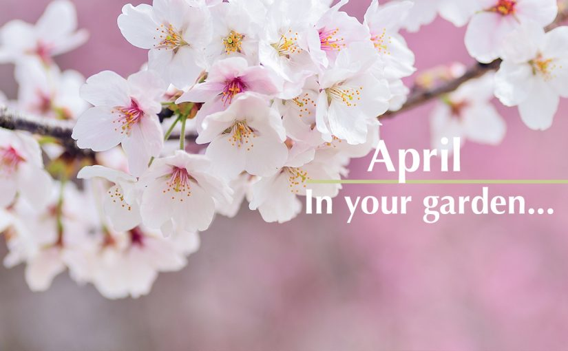 April in your garden…