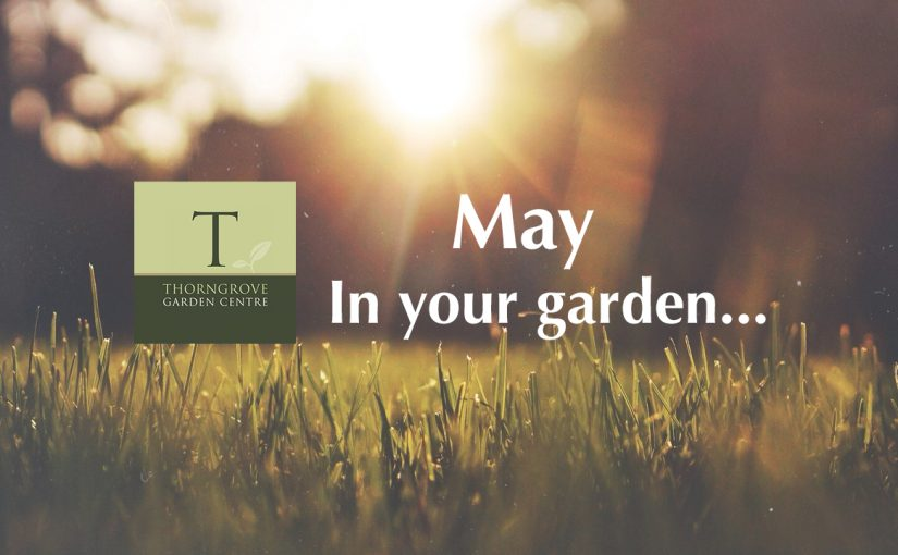 May…in your garden