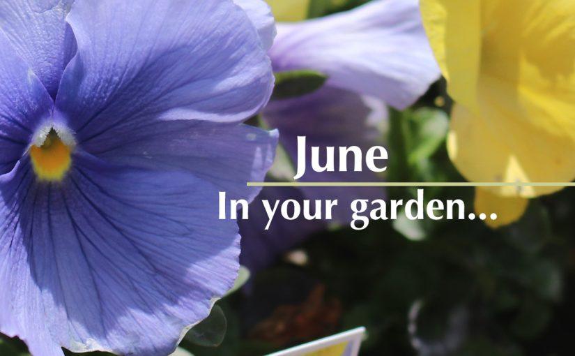 June…in your garden
