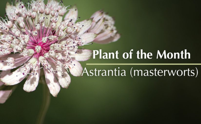 Plant of the month – June