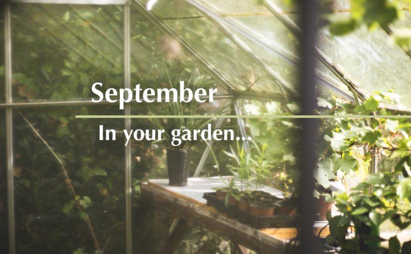 September in your garden