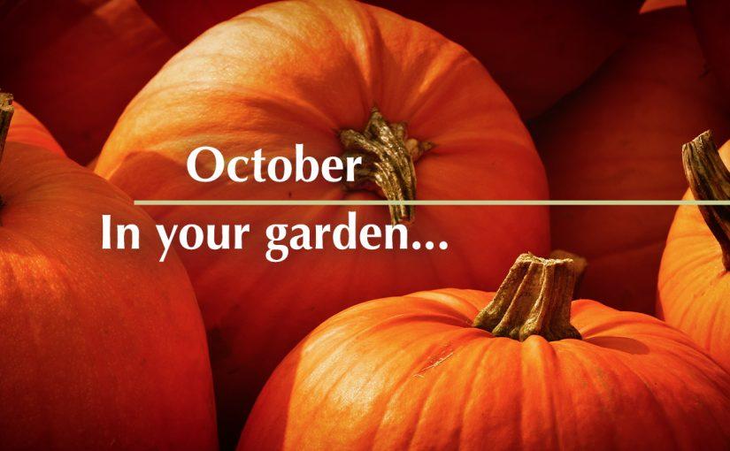 October in your garden…